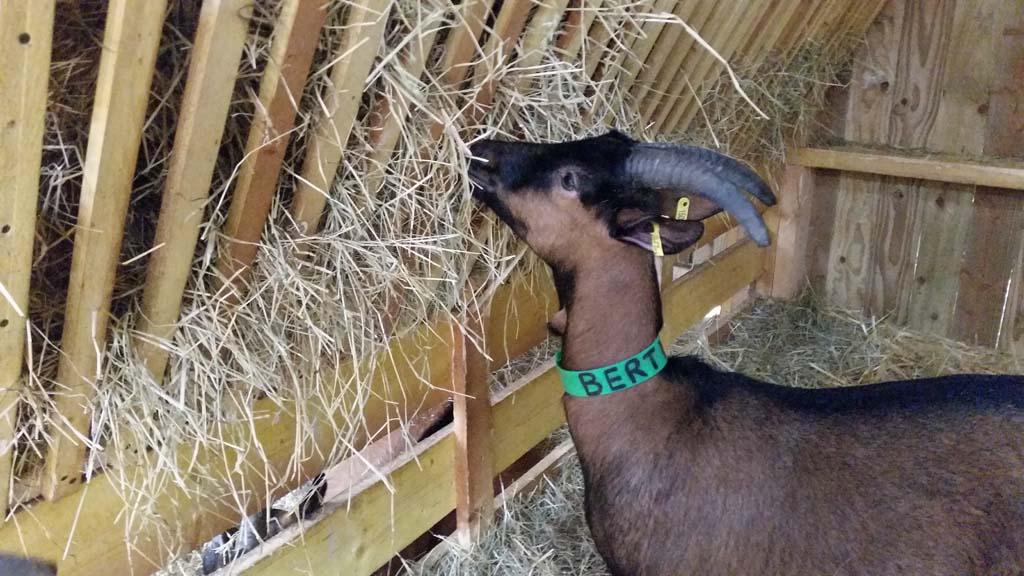 Berte